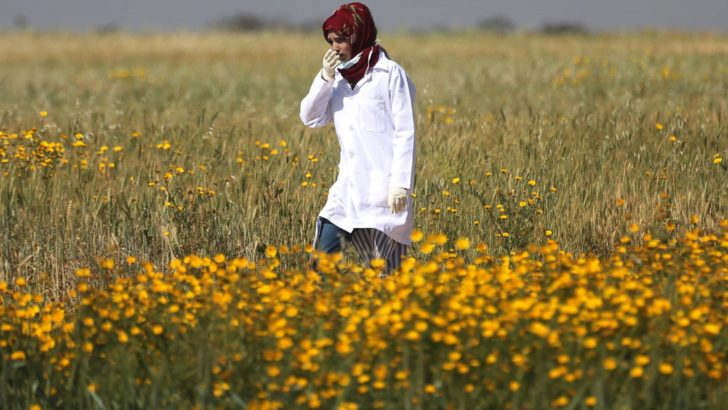 NYT investigation concludes Razan Al-Najjar's death was unnecessary, may be a war crime