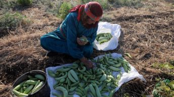 Israeli occupation costs Palestinians billions: UN