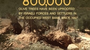 Israeli occupation of Palestine is devastating the natural environment
