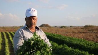 Gaza's Farmland: A harvest of heartbreak