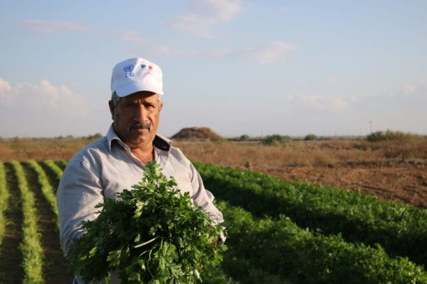 Gaza's Farmland: A harvest of heartbreak