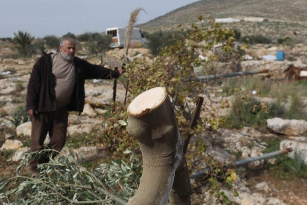 Israel destroys Palestinian nature reserve, uproots 10,000 trees