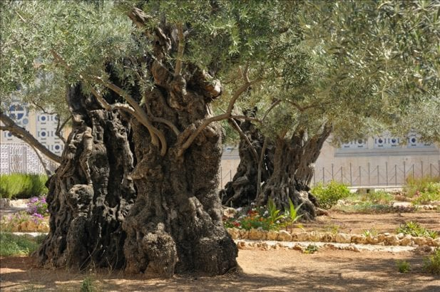 Easter for us, but Palestinians are still in Gethsemane